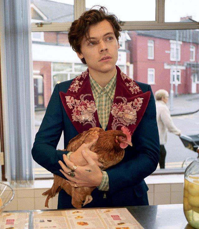 Harry Styles twarzą kampanii Gucci Tailoring 2018
