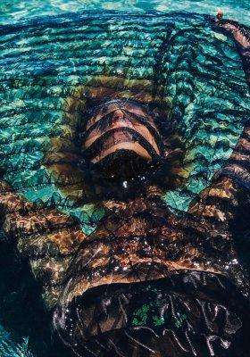 MODA I URODA W HOŁDZIE OCEANOM