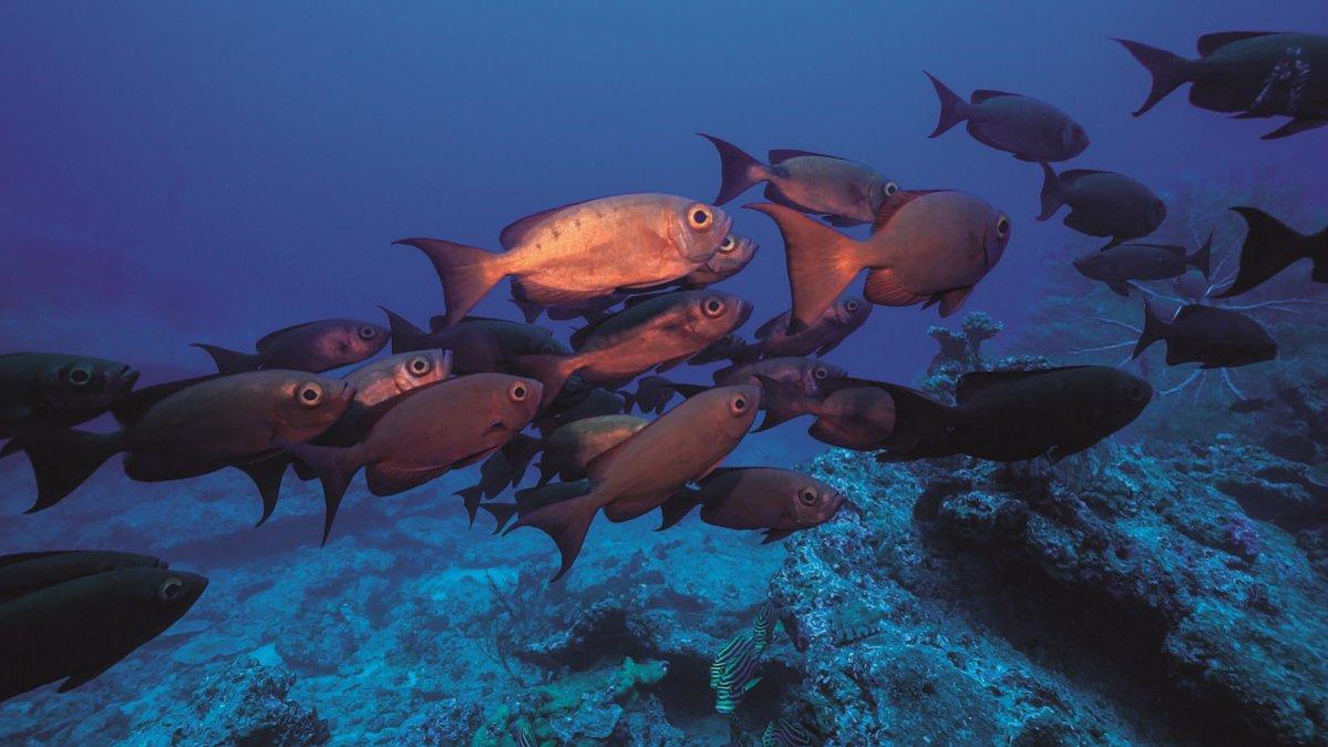 La Mer: zwierzęta w oceanach
