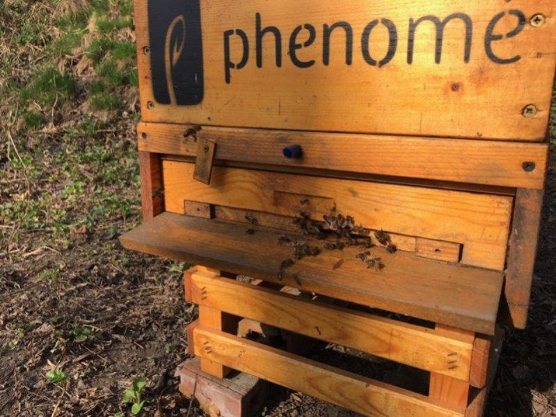 Polska marka Phenome angażuje się w pomoc pszczołom - zobaczcie, co słychać w pszczelarium!